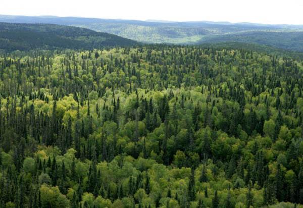 ліс карпати